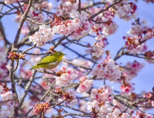 春はそこまで・・・